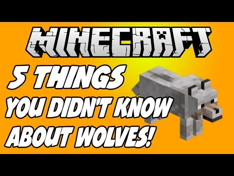 5 THINGS YOU DIDN'T KNOW ABOUT WOLVES IN MINECRAFT